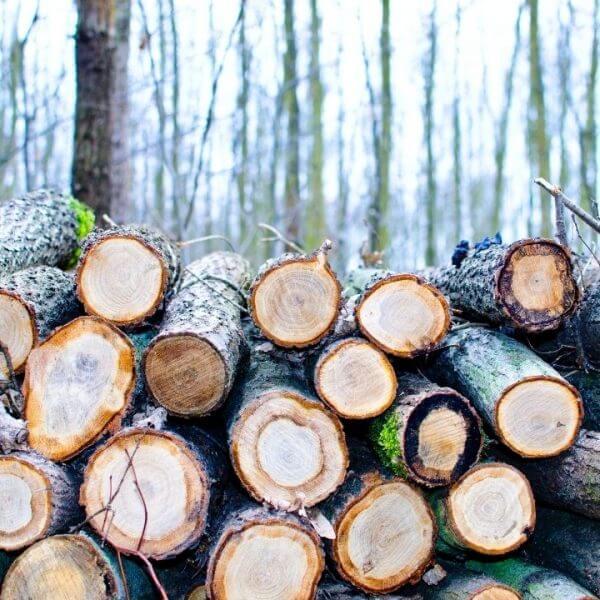 keo dán hotmelt ngành gỗ